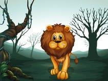 En lion i en läskig skog Arkivfoto