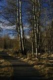 En liten bäck flödar en ho malt låg-ligga Fotografering för Bildbyråer