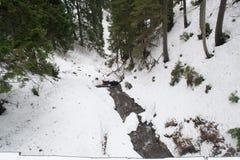 En liten bergflod bland gran-träden fotografering för bildbyråer
