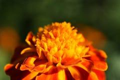 En liten blomma Arkivbild