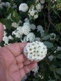 En liten blomma Arkivfoton