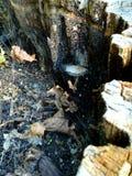 En liten champinjon växte i trädstammen arkivfoton