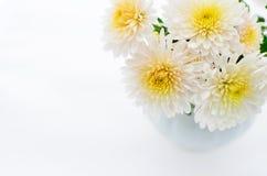 En liten chrysanthemumgrupp Royaltyfria Foton