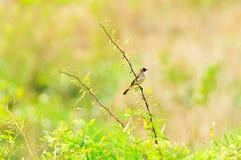 En liten fågel i vår Arkivbilder