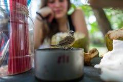 En liten fågel med flickan i bakgrund i Bali Arkivbilder