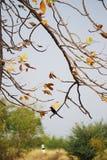 En liten fågel med trädfilialen royaltyfri fotografi