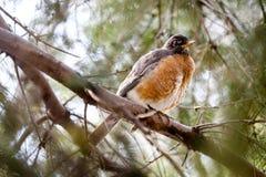 En liten fågel på ett träd Fotografering för Bildbyråer