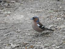 En liten fågel som sjunger i träna arkivfoton