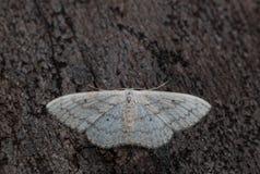 En liten fjäril på ett trä Arkivbild