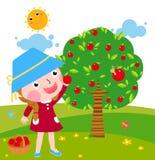 En liten flicka samlar äpplen i solig dag Royaltyfri Fotografi