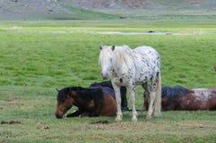 En liten flock av hästar i fålla Royaltyfria Foton