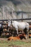 En liten flock av hästar i fålla Royaltyfria Bilder