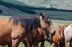 En liten flock av hästar i fålla Royaltyfri Fotografi
