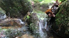 En liten flod i berget nära våren arkivfilmer