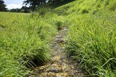 En liten flod som flödar till och med en parkera Royaltyfri Foto