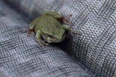 En liten grön padda som kopplar av på en gräsmattastol Royaltyfri Fotografi