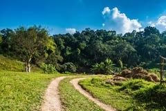 En liten grusväg som buktar överskriften till skogen Arkivfoto