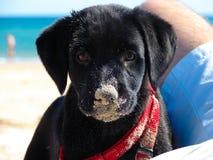 En liten hund Arkivbild