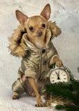 En liten hund i varma overaller Arkivfoton