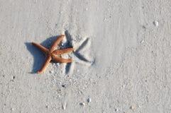 Sjöstjärna på sanden Arkivbilder