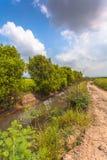 En liten kanal bredvid en liten väg kommer med vatten till risfältet Royaltyfria Bilder