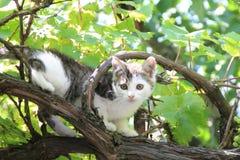 En liten katt klättrar Arkivbilder