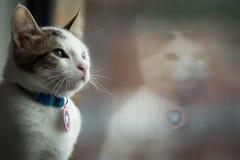 En liten katt som ut ser ett fönster fotografering för bildbyråer