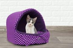 En liten kattunge sitter i ett varmt fotografering för bildbyråer