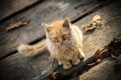 En liten lantlig katt Arkivbilder