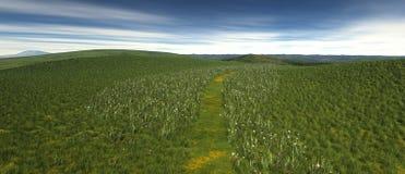 En liten lapp av gräs med vallmo och blommor Arkivfoto