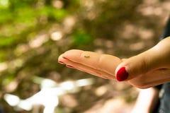En liten larv vilar i en mänsklig hand royaltyfria foton
