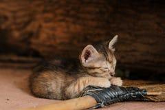 En liten orange katt Arkivbild