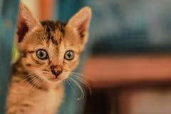 En liten orange katt som lyckligt spelar Arkivbild