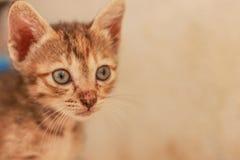 En liten orange katt som lyckligt spelar Fotografering för Bildbyråer