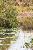 En liten pittoresk sjö i masaien Mara, Kenya arkivfoto