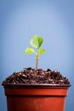 En liten planta växer ut ur en kruka av jord Arkivfoton