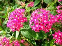 En liten rosa bukett som av naturen skapas Arkivbilder