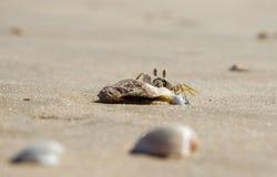 En liten sandkrabba sitter på en liten sten på sanden av en havsstrand Närbild royaltyfri fotografi