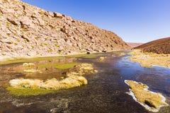 En liten sjö i nationell reserv för Los-flamenco Arkivfoto