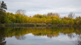En liten sjö i parkera, de gulna träden längs kusten Reflexionen av himmel och träd i vattnet av sjön Royaltyfria Bilder
