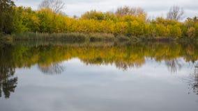 En liten sjö i parkera, de gulna träden längs kusten Reflexionen av himmel och träd i vattnet av sjön Royaltyfri Fotografi