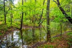 En liten sjö inom skog i hösttid/Plitvice lakes/Croa arkivbilder