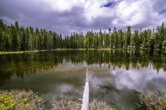 En liten sjö längs den Tioga vägen Arkivbilder