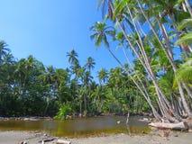 En liten sjö med palmtrees Arkivfoto