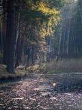 En liten sjö med sörjer och björkar på kusten i höstskogen arkivfoto