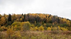 En liten skoghöst är kommande Gula Trees royaltyfri bild