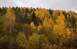 En liten skoghöst är kommande Gula Trees royaltyfria foton