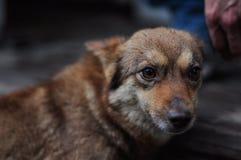 En liten skrämd hund Royaltyfria Bilder