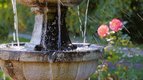 En liten springbrunn, nära springbrunnen växer rosor stock video