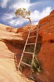 En liten stege längs en fotvandra rutt i Utah Royaltyfri Fotografi